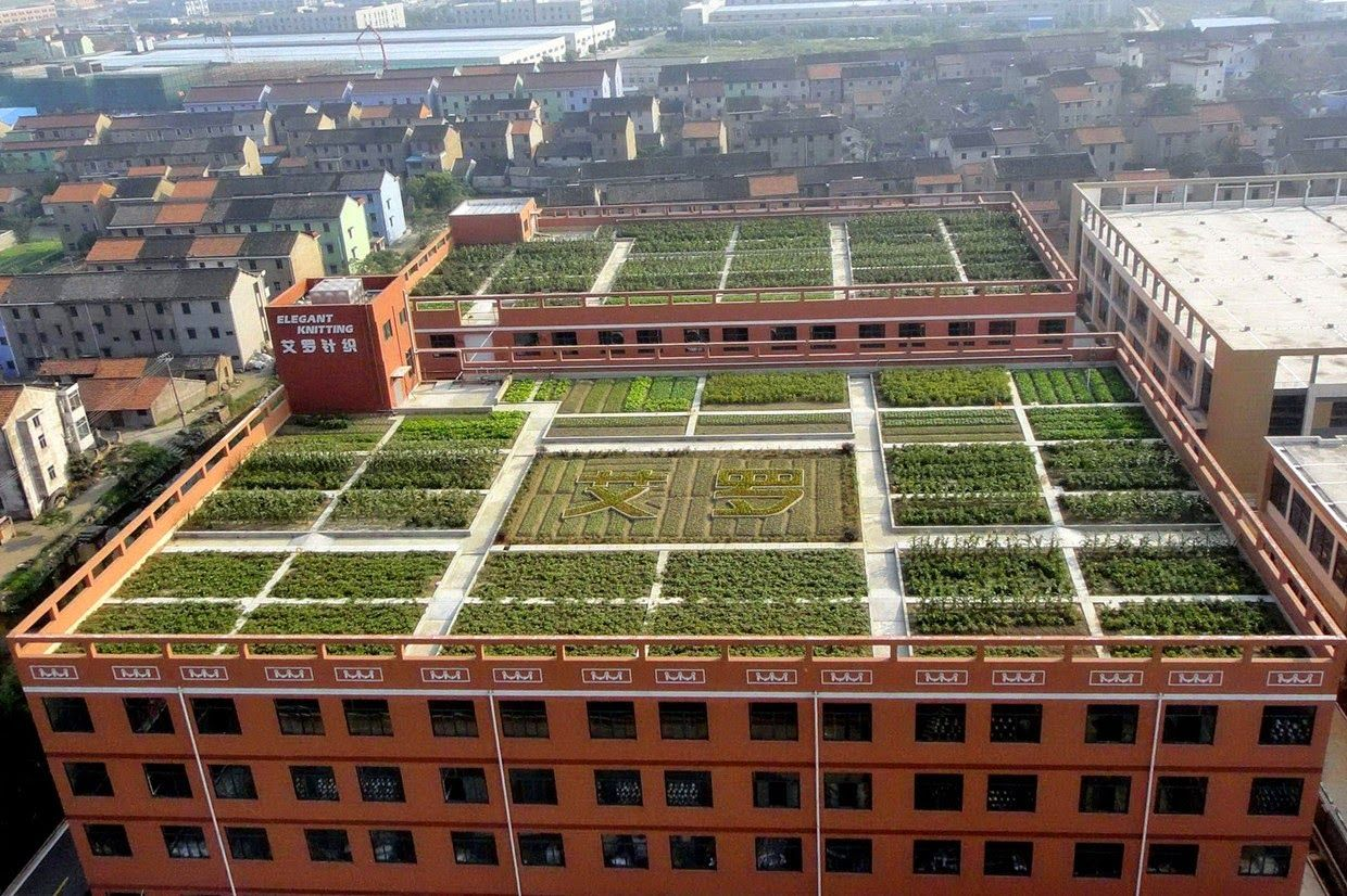 Ailuo garment factory planted more than 40 varieties of vegetables on its sqm workshop roofs. The harvest is enough to produce meals for all 200 workers in ... & TYWKIWDBI (