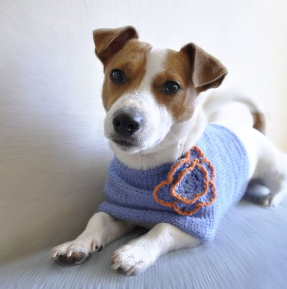 ok i actually LOVE this dog and the clothes! | 犬 | Pinterest ...