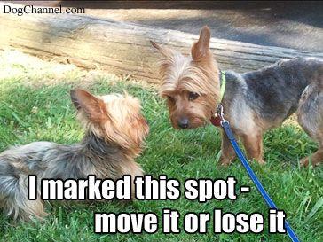 305adebfeeada109b9e28c572c39aad7 dog problems dog fancy dog memes pinterest dog, yorkies and