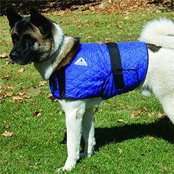 Hyperkewl Evaporative Cooling Dog Coat Dog Diapers Dog Coats