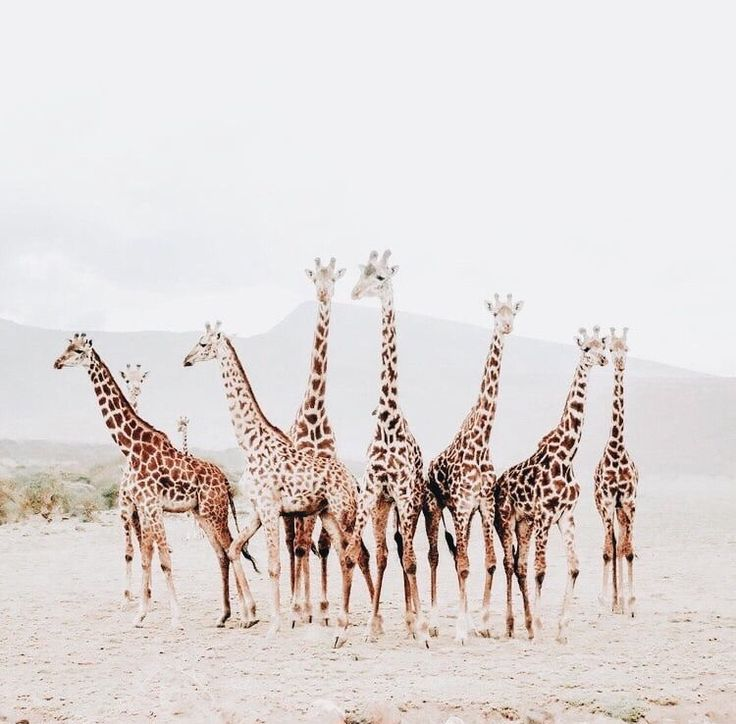 Alle Flecken #Tiere #Giraffe   - Wohnung - #alle #Flecken #Giraffe #Tiere #Wohnung