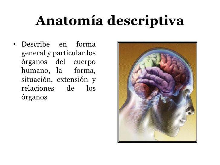Resultado de imagen de anatomia descriptiva o sistematica ...