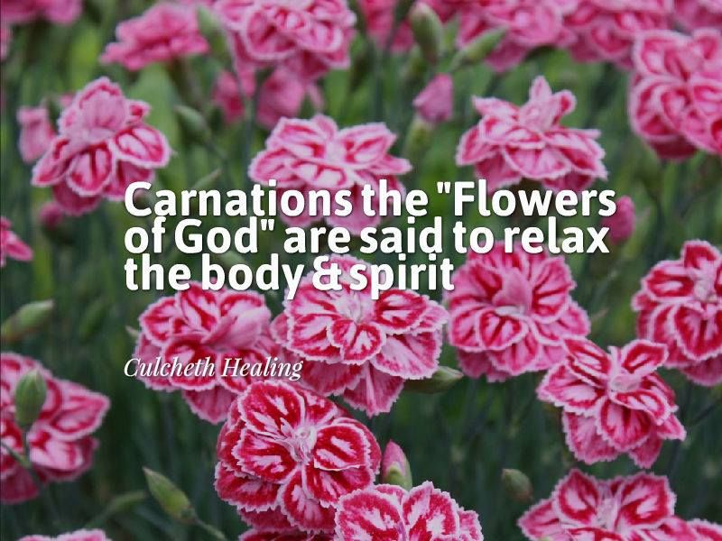 Carnation Flowers Flower Quotes Carnation Flower Health Quotes
