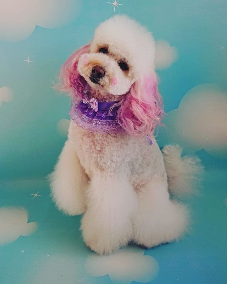 Sophisticated Design Done By Woofly Pawfect Dog Grooming
