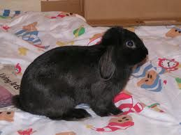 This looks just like my bunny, but I cant get a good picture of mine