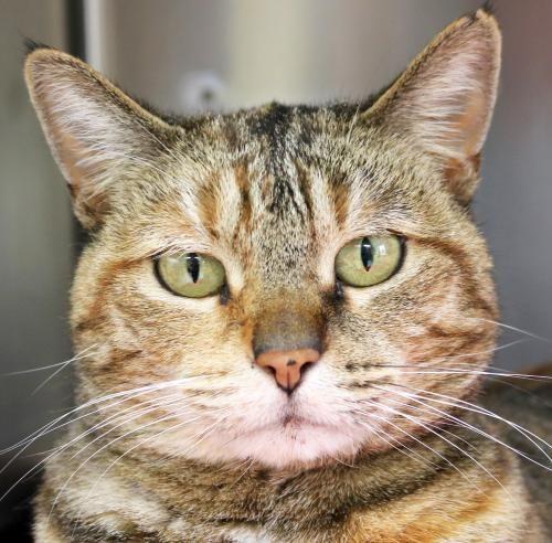 Adoptable Animal Humane Society Of Jefferson County Animals Humane Society Cats