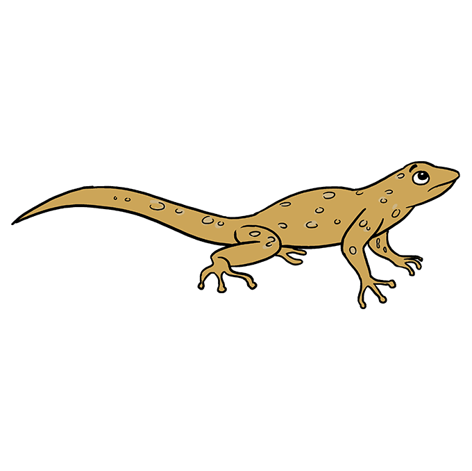How To Draw A Lizard Really Easy Drawing Tutorial Easy Drawings Drawings Simple Face Drawing