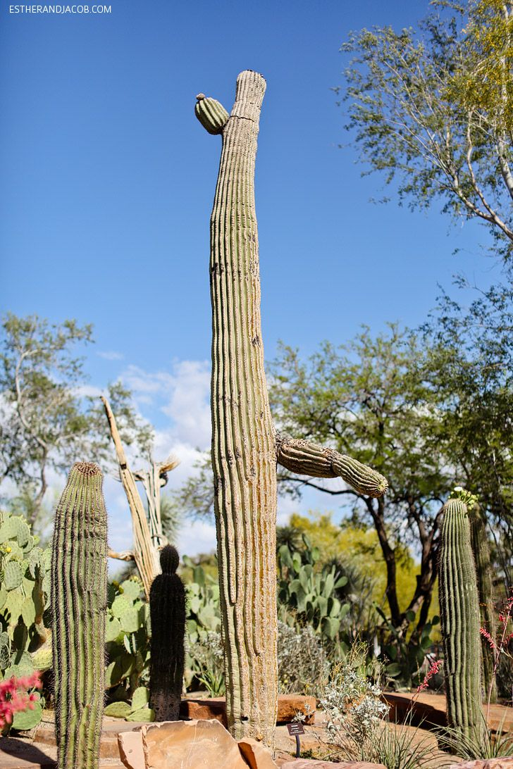 3060715f14905d1413fa3cb994191b44 - Ethel M Chocolate Factory And Botanical Cactus Gardens Las Vegas