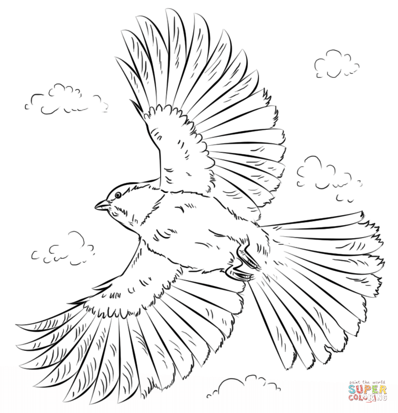 Black Capped Chickadee In Flight Coloring Page From Chickadee Category Select From 27237 Printable Crafts Of Cartoons Risunok Ptic Risunki Rusalki 3d Risunki
