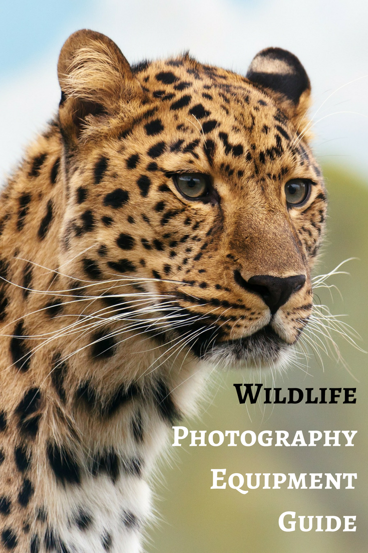 Wildlife Photography Equipment Guide (With images