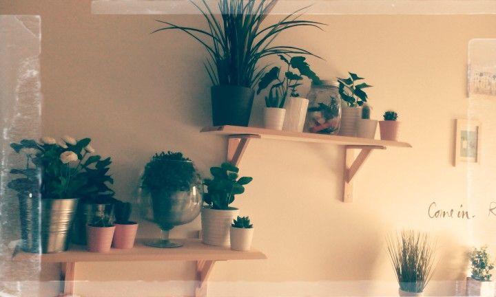 Plantes_cuisine