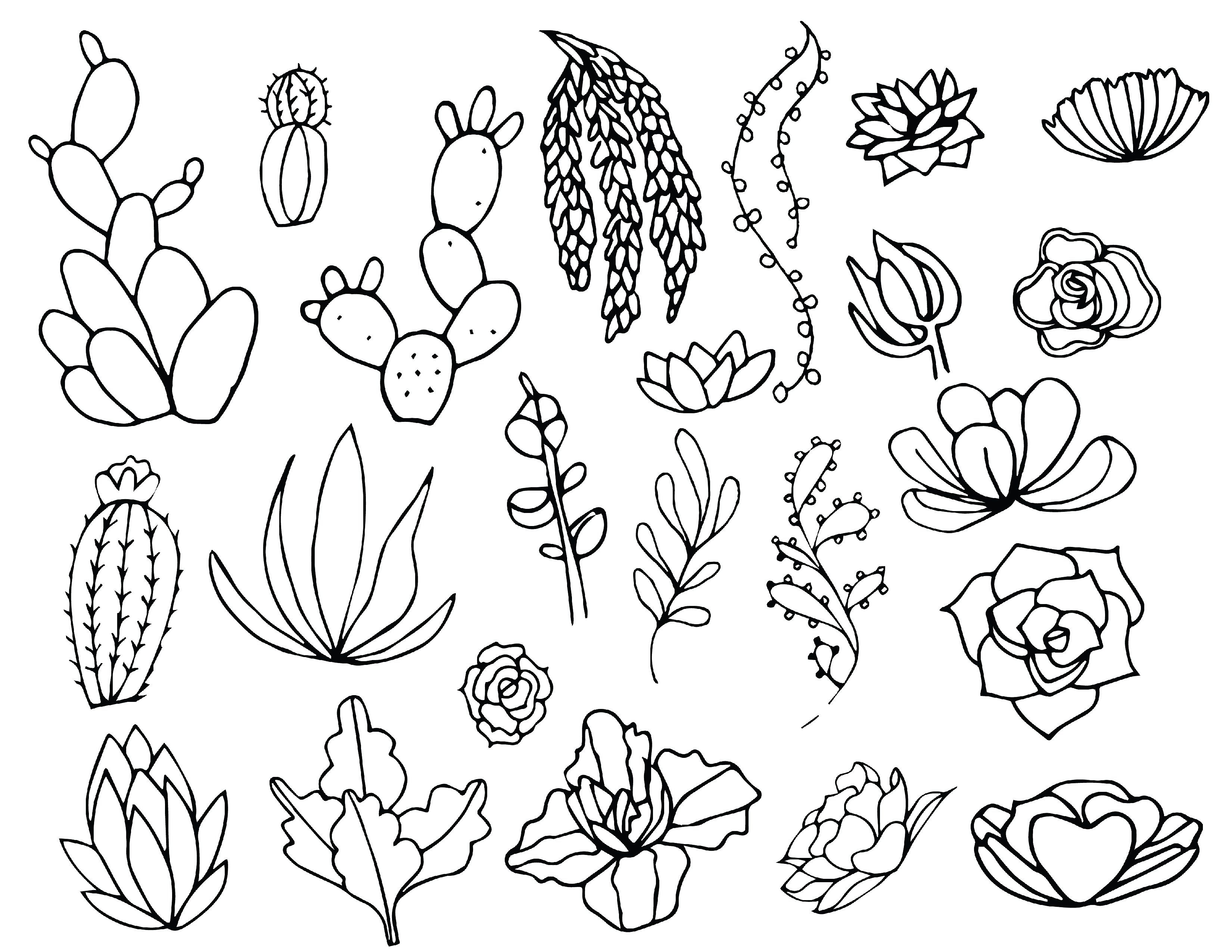 Pin on Drawings  Cactus Flower Outline