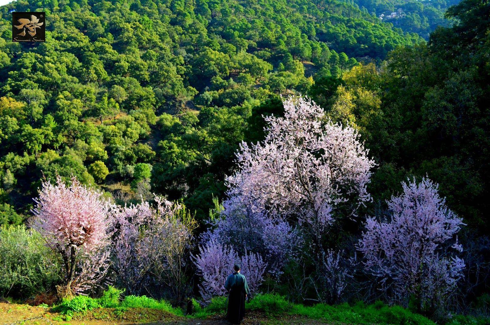 SAMURAI SPAIN 侍 COACHING PERSONAL: La esperanza es un árbol en flor que se balancea d...