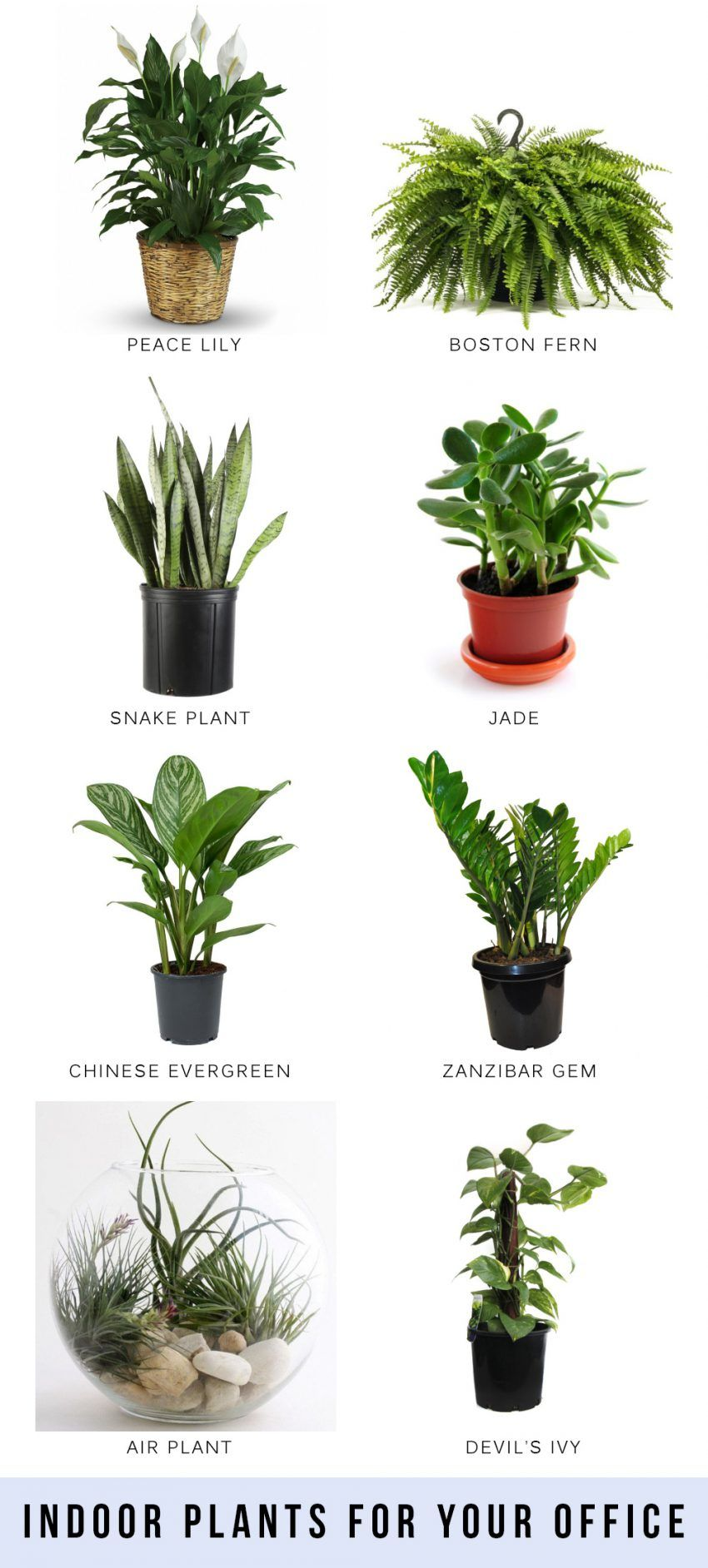 Indoor plants for your office | Plants, Best air purifying ... on tall houseplants, tropical houseplants, indoor houseplants, cactus houseplants,