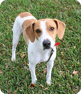 Pin By Jo Wiest On Rescue Dogs Beagle Mix Beagle Dogs