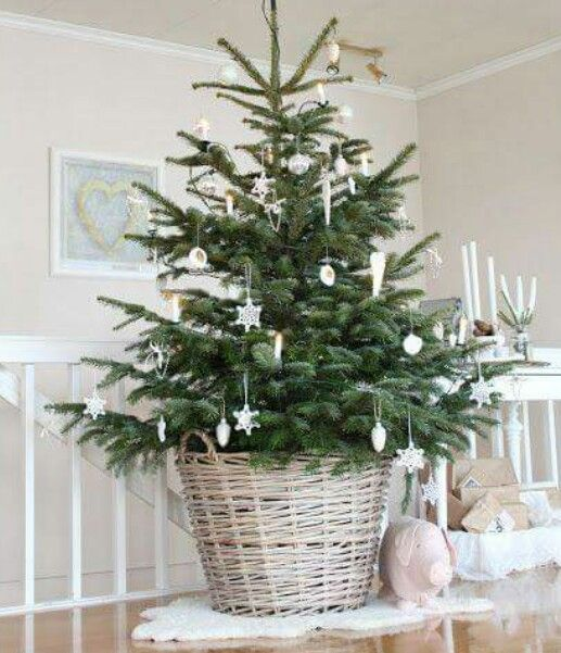 explore little christmas trees and more - Little Christmas Trees