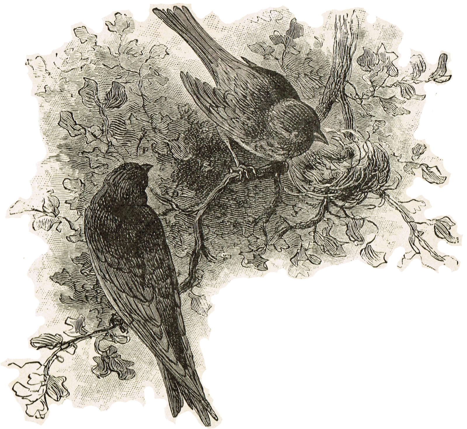 Antique Graphics Wednesday – 1898 Birds with Nest ...