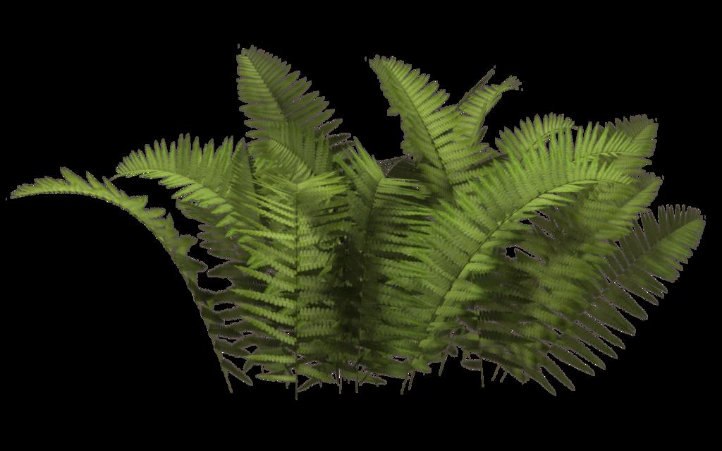 Bush Plant Png
