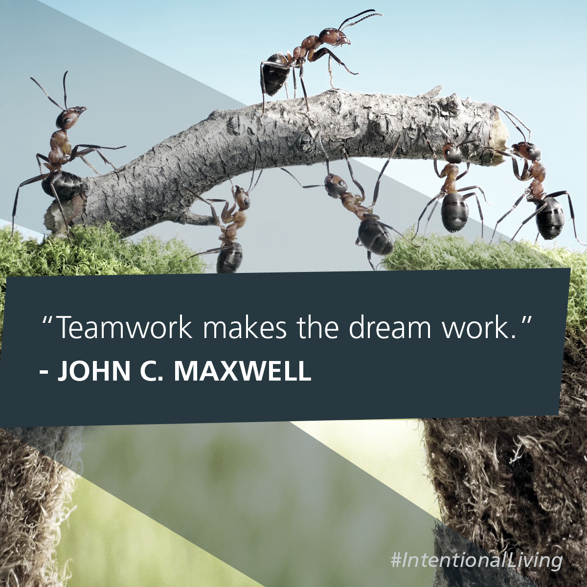 Teamwork Makes The Dream Work John C Maxwell Intentionalliving