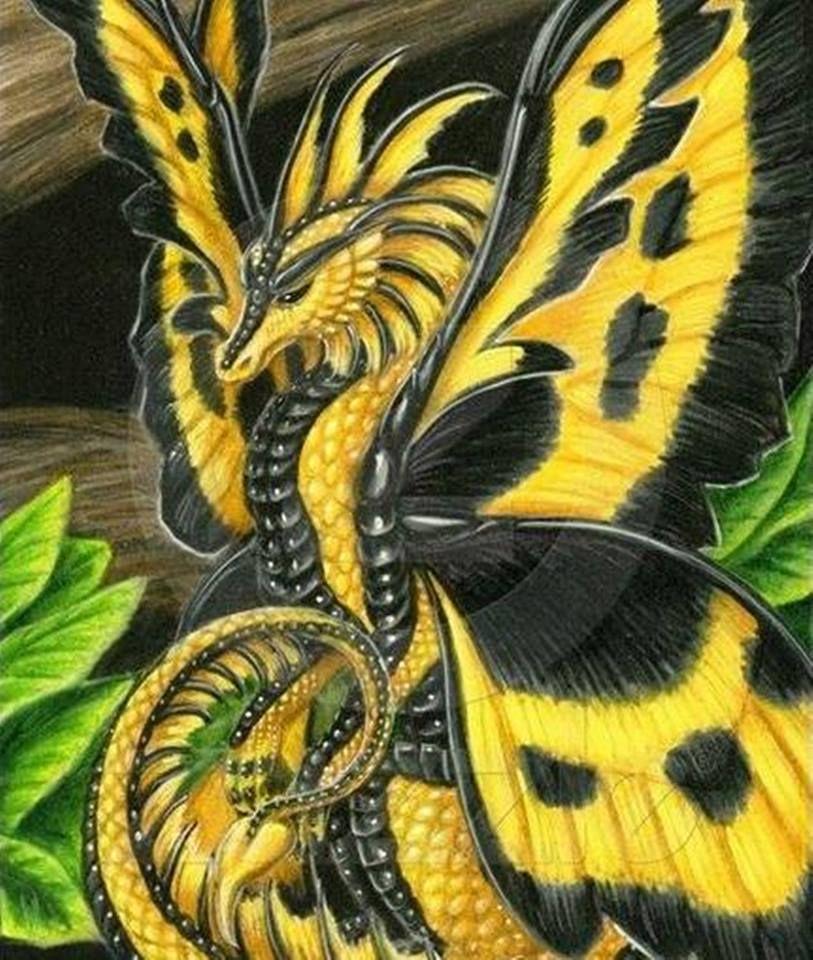 Butterflies dragon