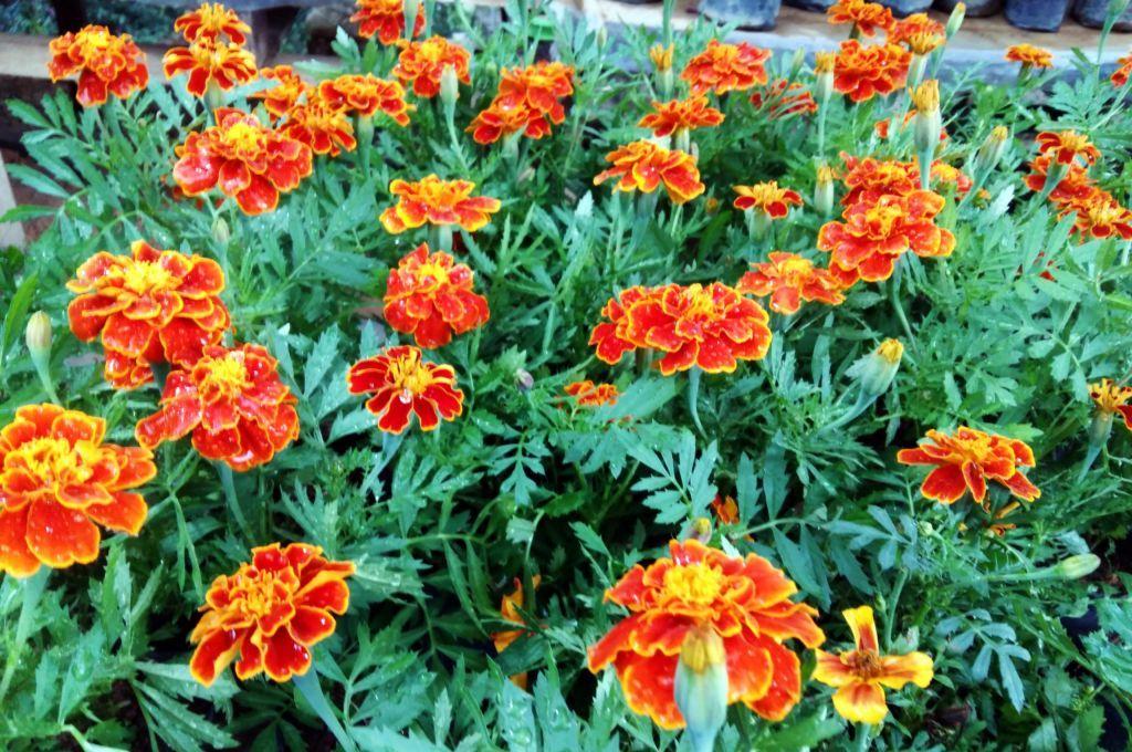 Orange color beautiful flower garden   Flower bucket ...