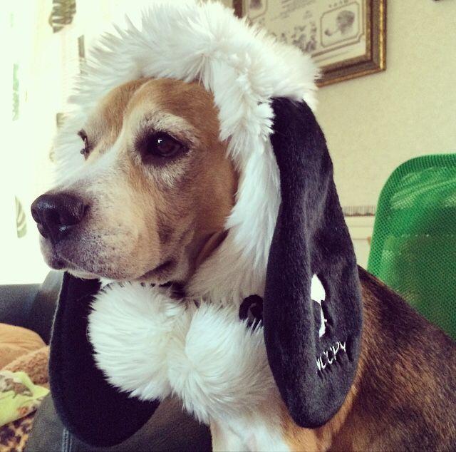 Beagle the Snoopy‼︎