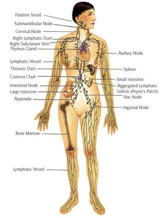 Lymphatic Drainage Massage Is One Of The Things I Do To