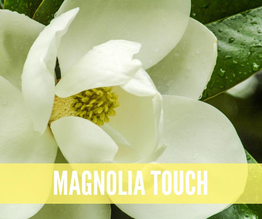 How To Purchase Magnolia Flower Magnolia Trees Magnolia