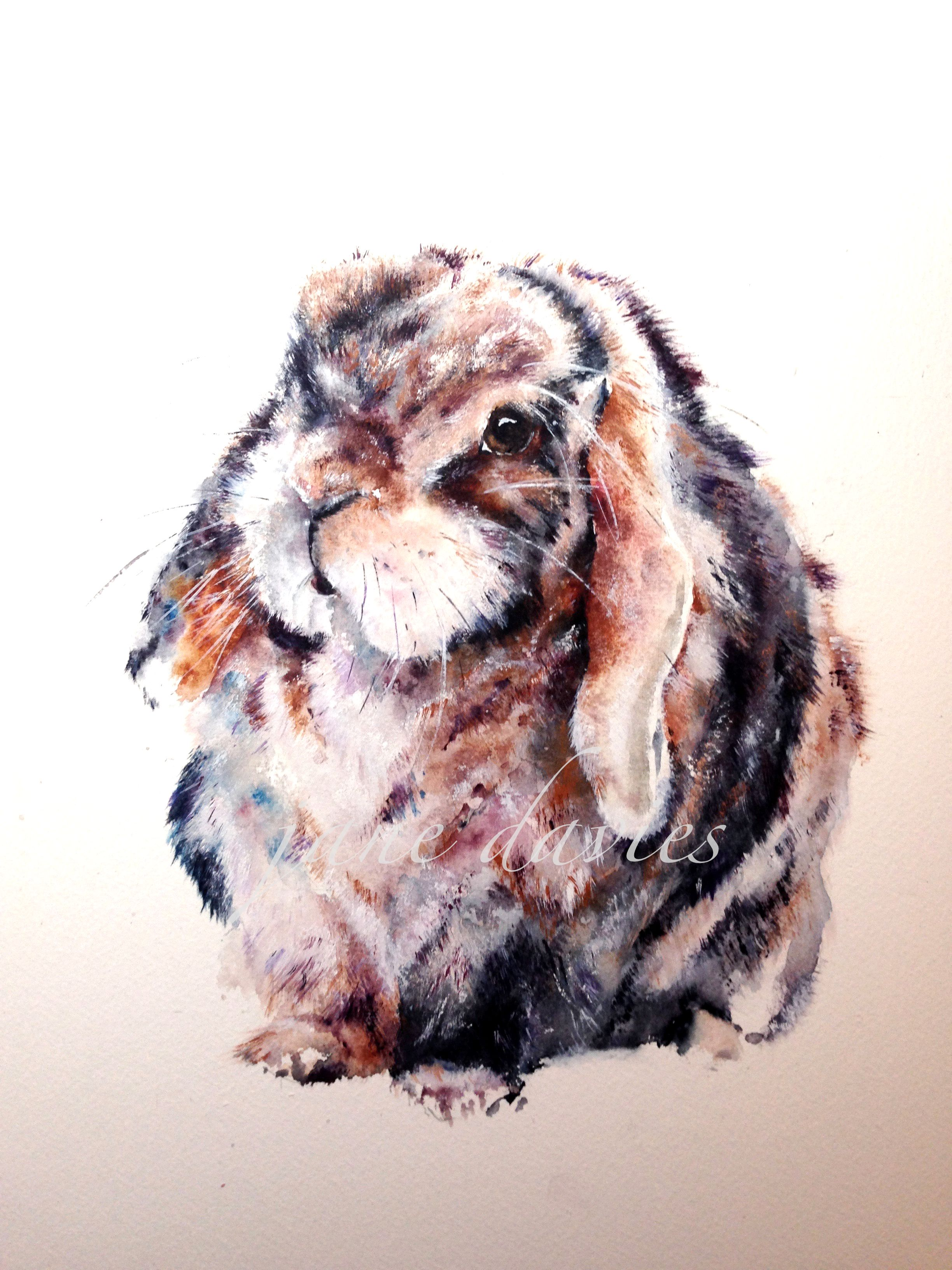 History of watercolor art - Pet Rabbit Painted In Watercolour For A Commission Piece By Artist Jane Davies