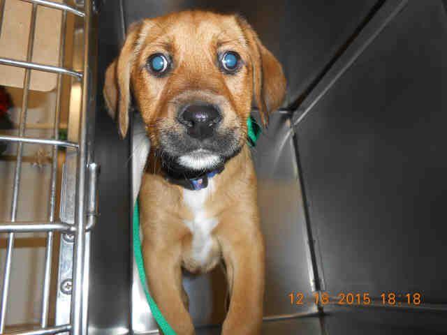 Gayweho Dogs 4 U On Labrador Retriever Dogs Nkla