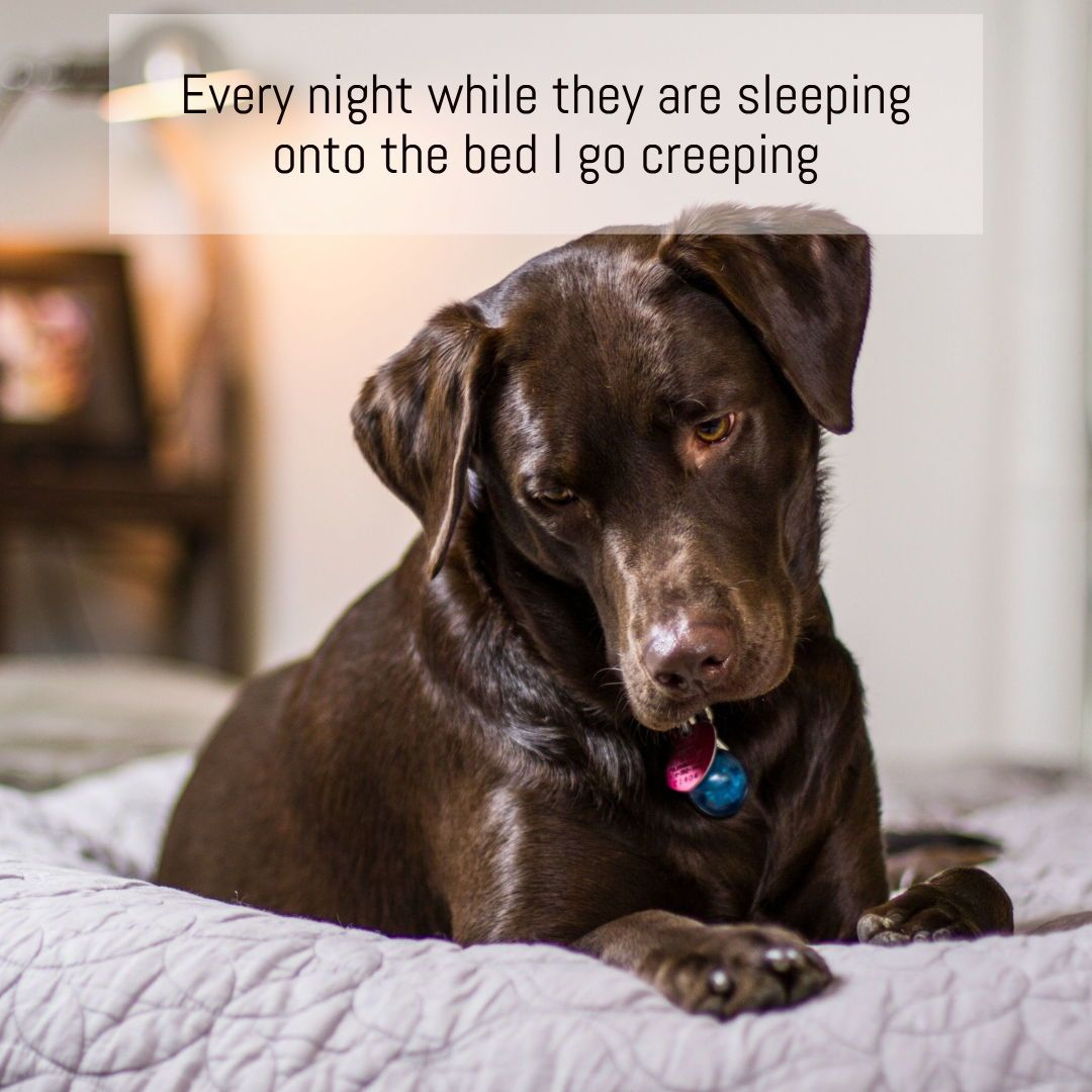 14 Poems From A Dog S Pov Dogpoems Dogquotes Quotes Dog Poems