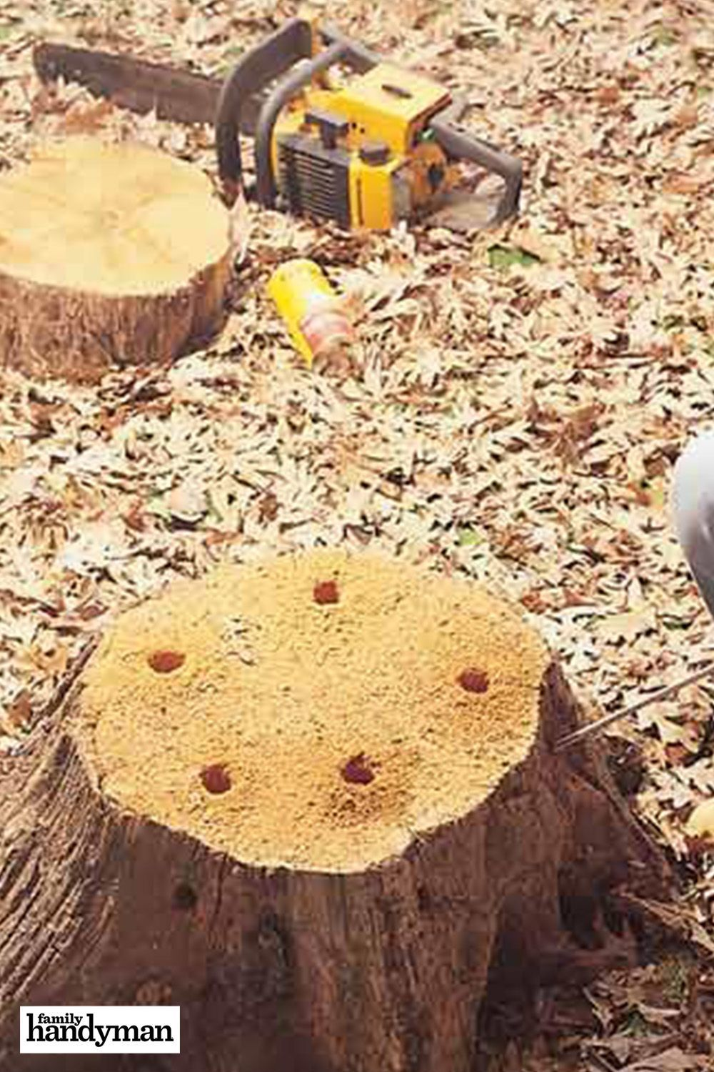 How to Remove a Tree Stump Painlessly in 2020 With images