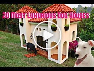 20 Most Luxurious Expensive Dog Houses Dog Houses Expensive