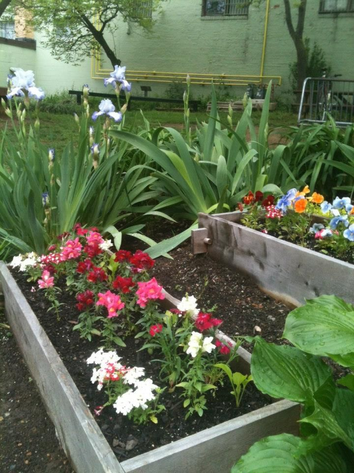 Our raised beds outside are full of blooming flowers!