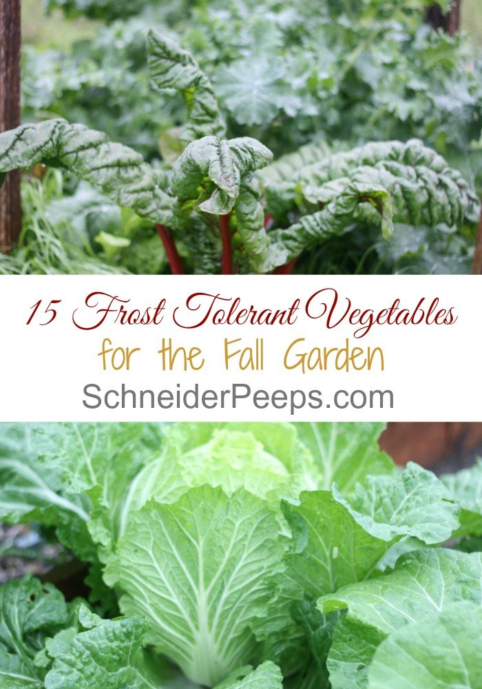 Just because its cold doesnt mean gardening is over Here is a list of 15 frost tolerant plants for the fall and winter vegetable garden plus growing tips