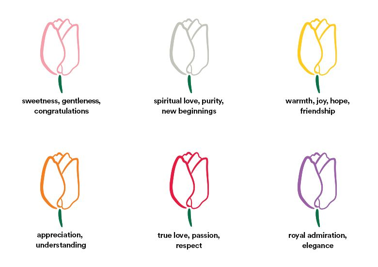 Discover The Meaning Of Every Tulip Color Tulip Colors Tulips Meaning Tulip Tattoo