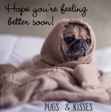 Image Result For Dog Cat Pet Get Well Card With Images Funny
