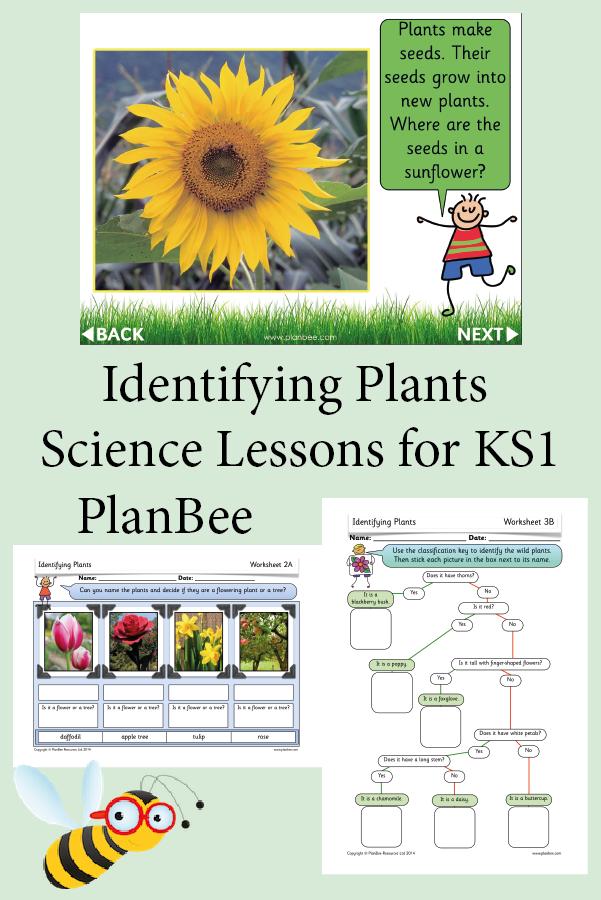 Identifying Plants Identify Plant Plants Uk Plants Worksheets