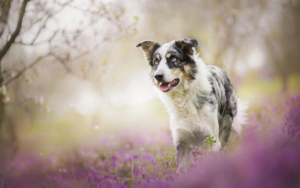 Pin by xupuvi petsbest on pets best pinterest dog wallpaper