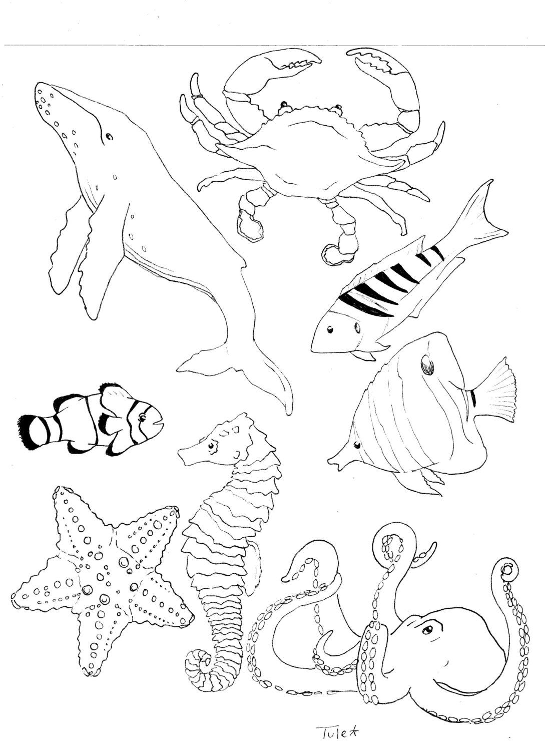 0cean coloring pages - Ocean Life Coloring Book Page By Sarahtuleartworks On Etsy