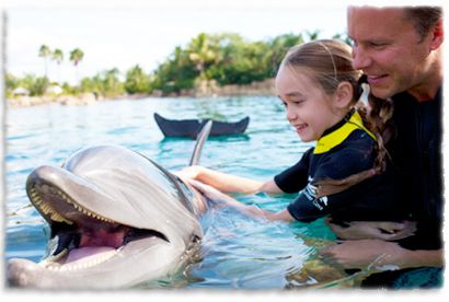 I dream of someday swimming with dolphins at Discovery Cove!