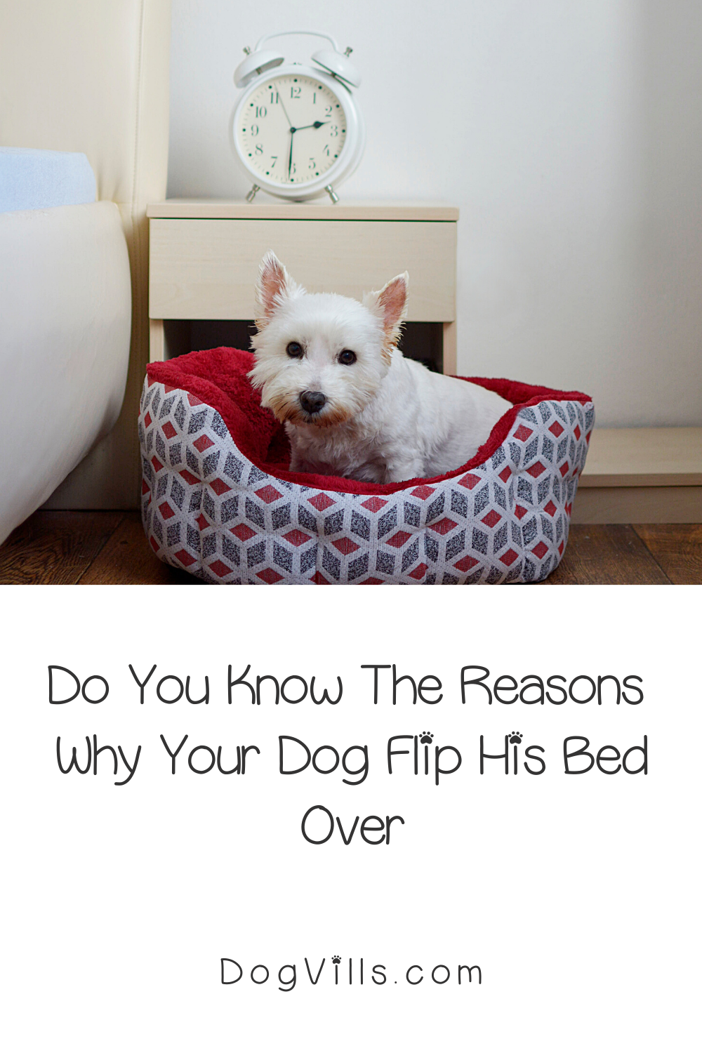 10 Reasons Why Your Dog Flips His Bed Over Dogvills In 2020 Your Dog Dog Behavior Dog Behavior Chart