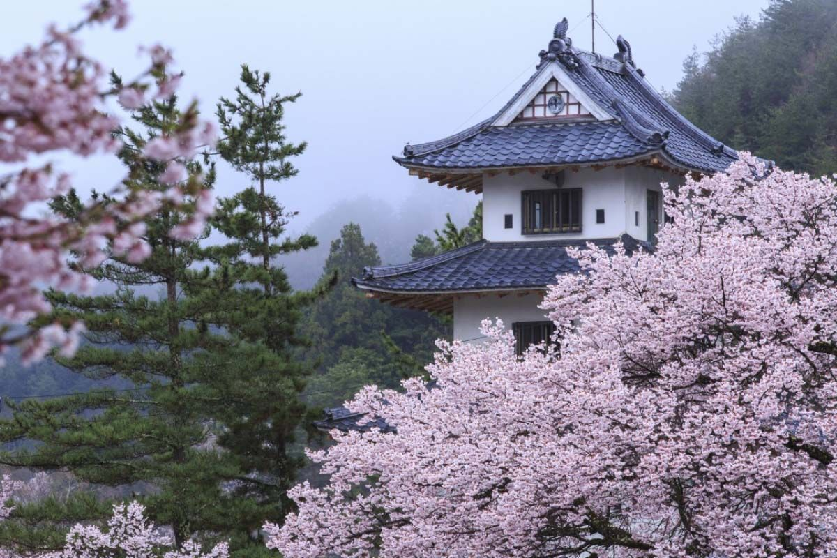 Japan Cherry Blossom Viewing In 2020 Best Dates Places To See Sakura In Japan Avenue One Cherry Blossom Japan Good Dates