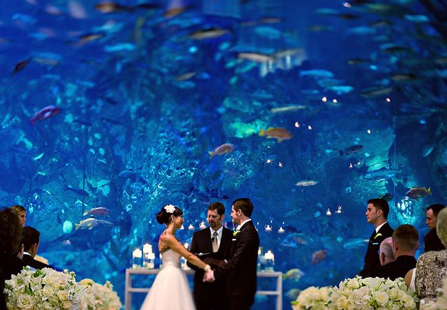 6 Amazing Aquarium Wedding Photos