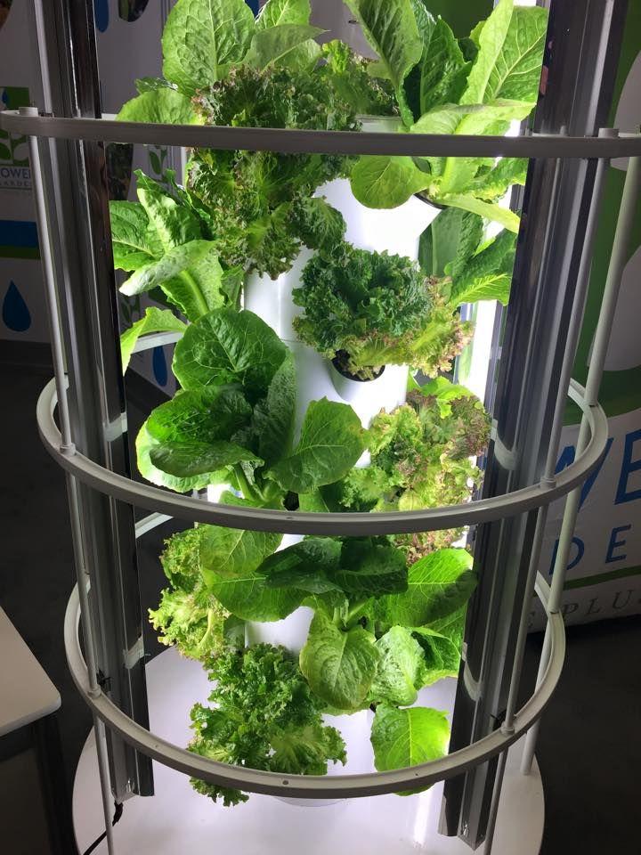Indoor garden grown in Calgary, Canada grow your food