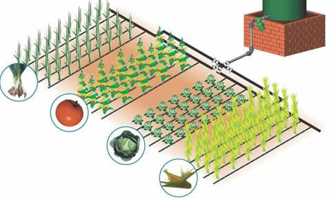 Ag Vegetable Garden Irrigation Design Drip Irrigation