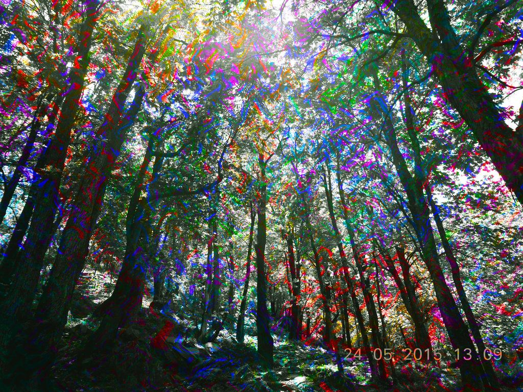 Psychedelic Forest Art Psychedelic Forest Painting