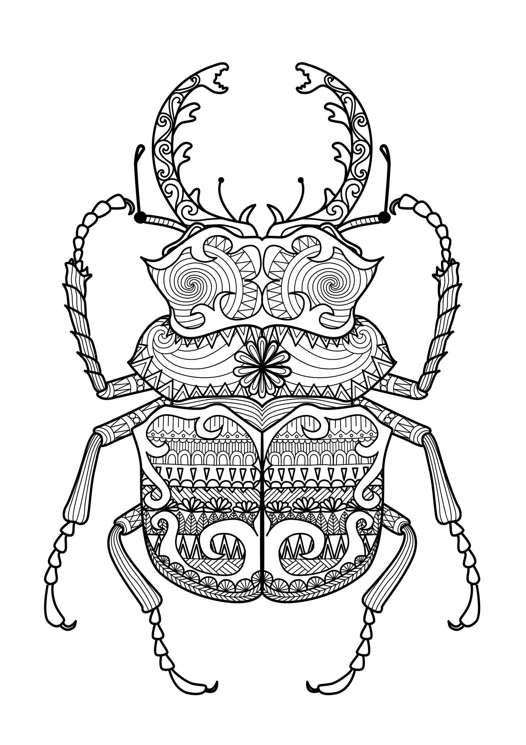 Charmant Display Image Coloring Zentangle Beetle By Bimdeedee