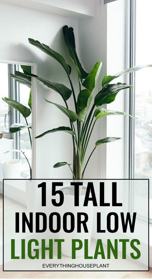 15 Tall Indoor Low Light Plants In 2020 Low Light House 400 x 300
