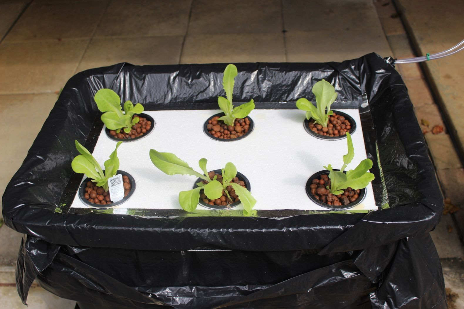 How To Build A Cheap Hydroponic Lettuce Floating Raft To Build A Cheap Hydroponic Lettuce Floating Raft